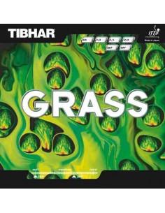 Rubber Tibhar Grass